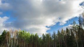 Blå himmel och träd, 4k stock video