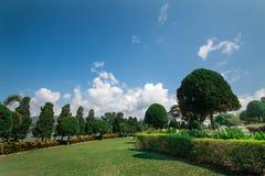 Blå himmel och trädgård Fotografering för Bildbyråer