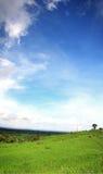Blå himmel på det Padi fältet, Jatiluwih arkivbild