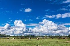 Blå himmel på kust- äng Arkivfoton