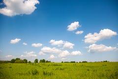Blå himmel, skog och äng Royaltyfri Bild