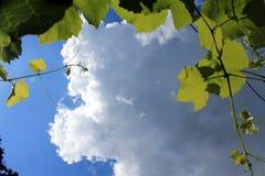 Blå himmel, sommar, vita moln, sol, skuggor, gröna sidor royaltyfri fotografi
