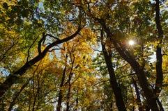 Blå himmel till och med de färgrika sidorna av träden Royaltyfri Foto