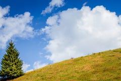 Blå himmel, vitmoln, grönt fält och träd i vår Fotografering för Bildbyråer