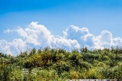 Blå himmel, vitmoln och ett grönt fält Arkivfoto
