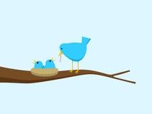 blå hungrig fågelungematning för fågel Arkivbild