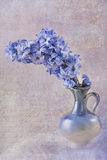 Blå hyacint Arkivbild