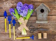 Blå hyacint- och arbeta i trädgårdenaktivering Royaltyfria Bilder