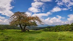 Blå kantgångallé, sceniskt crabappleträd Royaltyfria Bilder