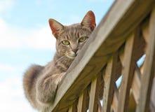 blå katttabby Royaltyfria Bilder
