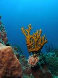 blå korallbrand Royaltyfri Fotografi