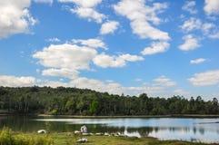 blå lakesky Royaltyfri Fotografi