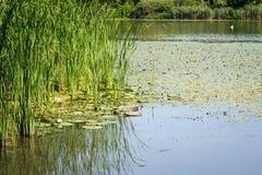 blå lakesky under Arkivfoto