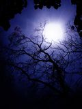 blå lampa Arkivfoton