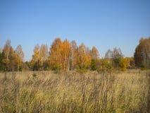 Blå ljus himmel, höst, gula träd, torkat gräs i ängen royaltyfri foto
