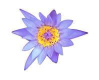 Blå lotusblomma på vit bakgrund arkivbild