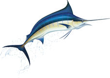 blå marlin Royaltyfria Bilder