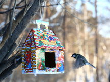 Blå mes som matar i vinter Fotografering för Bildbyråer