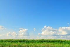 blå molnig fältgreensky Royaltyfri Bild