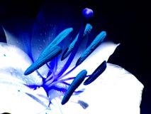 blå mood Royaltyfria Bilder
