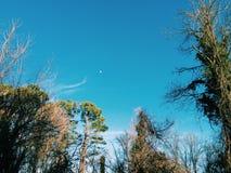 blå moon Arkivbilder