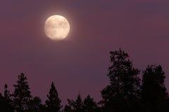 blå moon Fullmåne 08/19/13, Oregon, kaskadSiskiyou medborgare Royaltyfria Bilder
