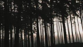blå morgon arkivfilmer