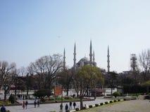 blå moskéfjädersikt Arkivbild