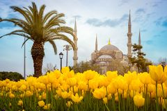 Blå moskésultanahmet Camii, Istanbul royaltyfria bilder