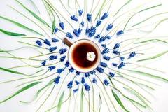 Blå muscariblomma och kopp te med kamomill Arkivbilder