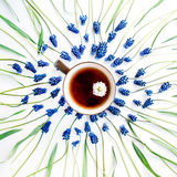 Blå muscariblomma och kopp te med kamomill Fotografering för Bildbyråer