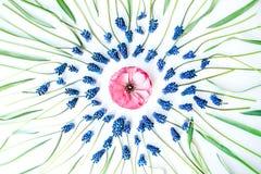 Blå muscariblomma och ranunculus Arkivbild