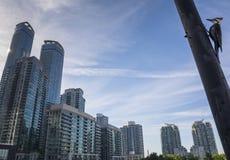 Blå nötskrika i Toronto Fotografering för Bildbyråer