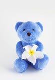 Blå nallebjörn Arkivbilder