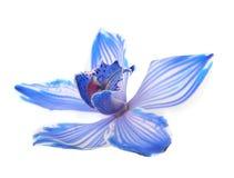 blå natur arkivbild