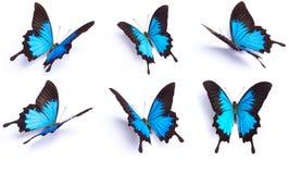 Blå och färgrik fjäril på vit bakgrund