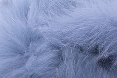 Blå pälsstola Arkivbild