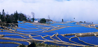 blå panoramarice terrasserar yuanyang Royaltyfria Bilder