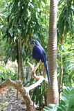 Blå papegoja, djungelö, Miami, Florida Royaltyfria Foton