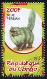 Blå perser fotografering för bildbyråer