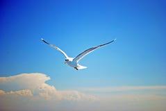 blå seagullsky Royaltyfria Bilder