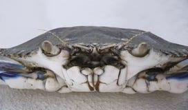 Blå simmareCrab Very närbild Arkivfoton