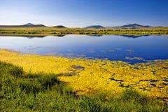Blå sjö, grönt gräs, kullar, blå himmel i morgonen Arkivbild