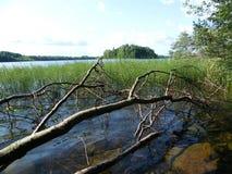Blå sjö i den gröna skogen fotografering för bildbyråer