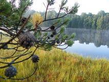 Blå sjö i den gröna skogen royaltyfri bild