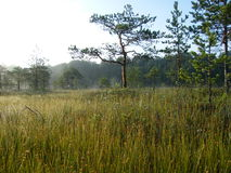 Blå sjö i den gröna skogen royaltyfri fotografi