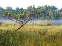 Blå sjö i den gröna skogen arkivbilder