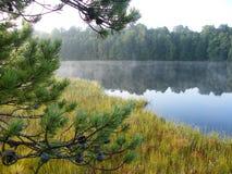 Blå sjö i den gröna skogen royaltyfria foton