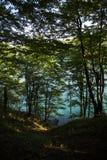 Blå sjö och trädet Arkivfoto