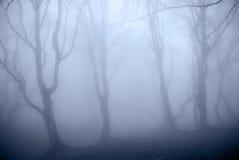 blå skog Arkivbild
